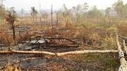 Từ 2020, người có hành vi hủy hoại đất bị xử phạt như thế nào?