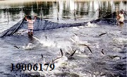 Tư vấn Luật thủy sản – gọi 19006179
