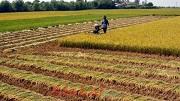 Tự ý chuyển đất trồng lúa sang đất phi nông nghiệp ở nông thôn bị phạt bao nhiêu?