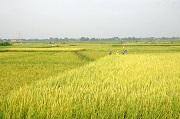 Tự ý chuyển đổi quyền sử dụng đất nông nghiệp mà không đủ điều kiện quy định