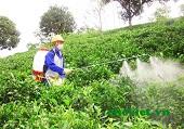 Vi phạm các quy định về quảng cáo thuốc bảo vệ thực vật