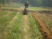 Vi phạm điều kiện chuyển đổi cơ cấu cây trồng trên đất trồng lúa bị phạt bao nhiêu?