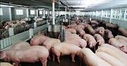 Vi phạm quy định về quảng cáo thức ăn chăn nuôi